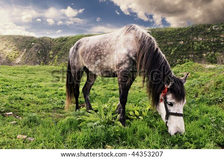 meadow respect our horse - stock photo