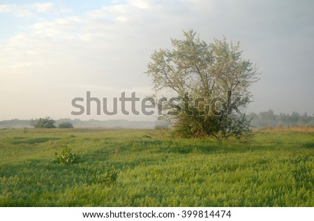 meadow spring at sunrise - stock photo