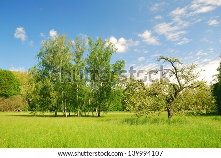Meadow with apple and birch trees in springtime