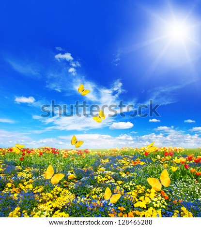 meadow with assorted flowers in green grass. spring landscape with butterflies and sunny blue sky - stock photo