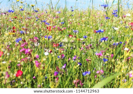 Meadow with beautiful summer flowers, Allgäu, Bavaria