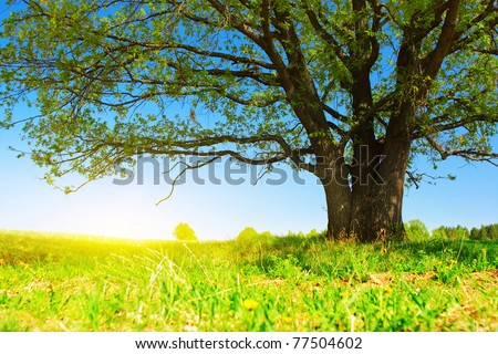 Meadow with big tree with fresh green leaves - stock photo