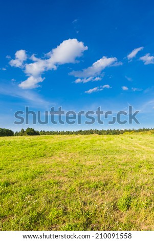meadow with blue sky at sunny day