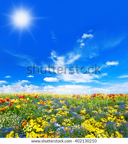Meadow with colorful spring flowers. Tulips over sunny spring blue sky background. Spring time. Spring blossoming - stock photo