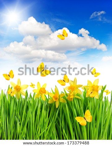 meadow with daffodils flowers in green grass. springtime landscape with butterflies and sunny blue sky. collage - stock photo
