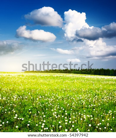 Meadow with dandelions and wild herbs with blue sky and clouds