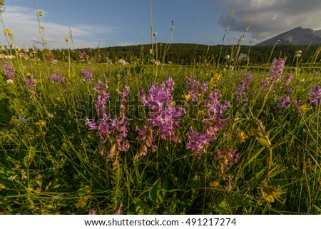 Meadow with flowers at sunset with Mount  in the background.