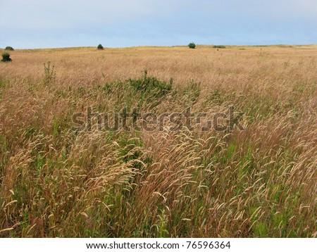 meadow with long grass on san juan island, washington, usa - stock photo