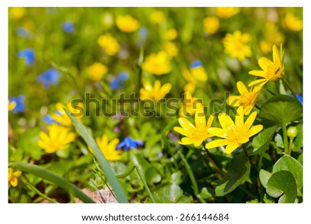 meadow with multicolored flowers   - stock photo