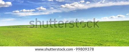 meadow with sheep in the distance, sky and clouds - stock photo
