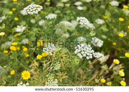 Meadow with yellow and white flowers - stock photo