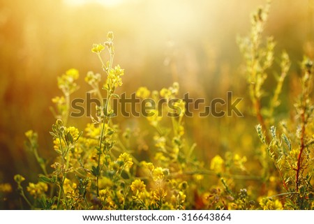 meadow yellow flowers - stock photo