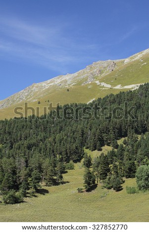 Meadows and evergreen forest on the mountain slope on a sunny day - stock photo