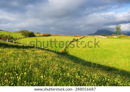 meadows and hills on spring