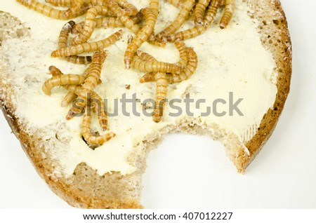 mealworm bread