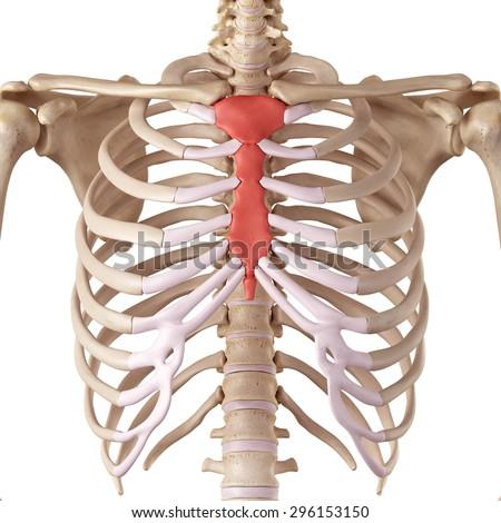 Medical term paper