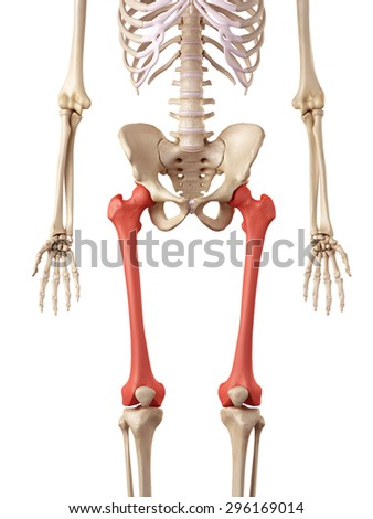 leg bone stock images royalty free images vectors. Black Bedroom Furniture Sets. Home Design Ideas