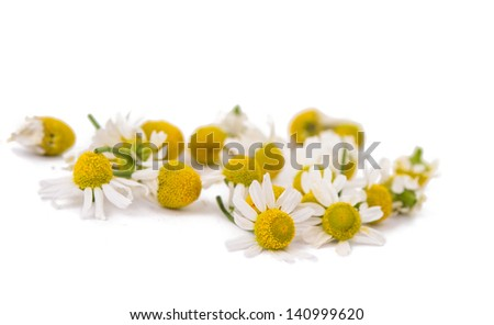 Medical Chamomile isolated on white background - stock photo