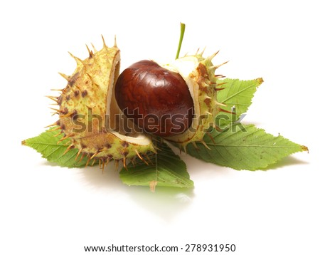 Medical Chestnut - stock photo