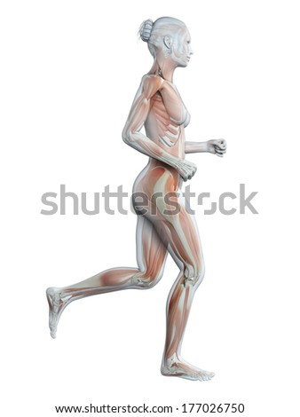medical 3d illustration - jogging woman - visible muscles - stock photo