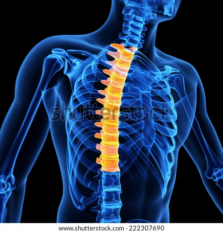 medical 3d illustration of the thoracic spine
