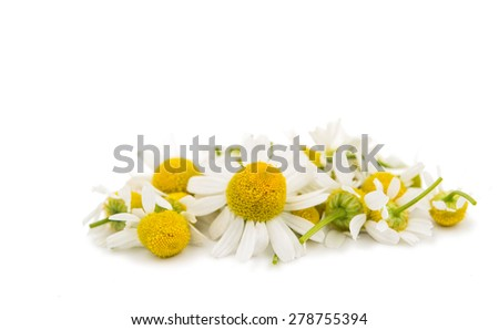 Medical daisy on a white background - stock photo