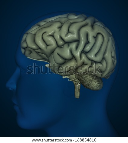 Medical illustration of brain structure - stock photo