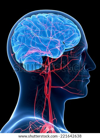 medical illustration of the brain and head arteries - stock photo