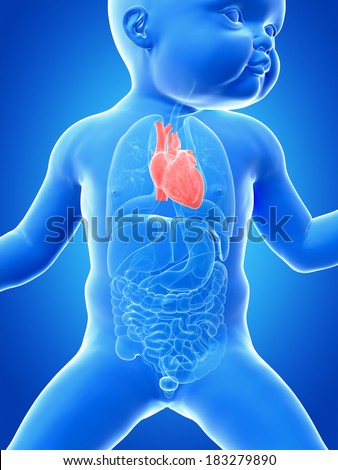 medical illustration showing the heart of a baby - stock photo