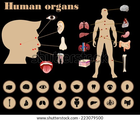 Medical infographics. Presentation set. Human body with internal organs plus buttons. - stock photo