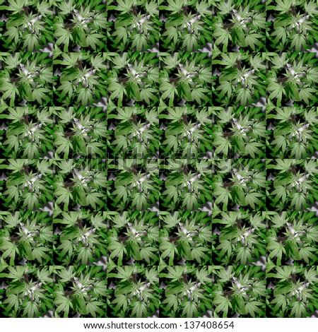 Related Pictures marijuana art leaf poster no 1 marijuana art leaves ...