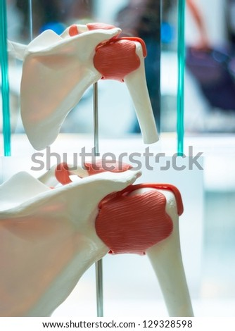 Medical photo of artificial muscles and bones - stock photo