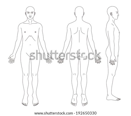 human body diagram stock images, royalty-free images & vectors, Human body