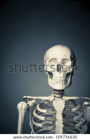medical skeleton model with dramatic light