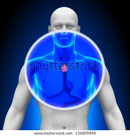 Medical X-Ray Scan - Thymus - stock photo