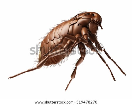 medically accurate illustration of a flea - stock photo