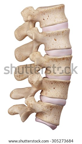 medically accurate illustration of the lumbar spine - stock photo