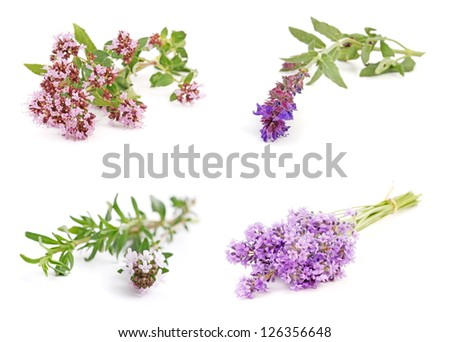 Medicinal and culinary herb flower collection, isolated on white background. - stock photo