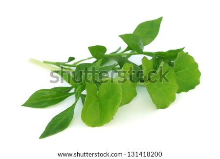Medicinal herbs � henna with thankuni over white background - stock photo