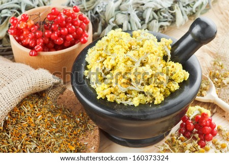 medicinal herbs on table, herbal medicine - stock photo