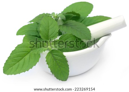 Medicinal holy basil or tulsi leaves on a mortar with pestle - stock photo