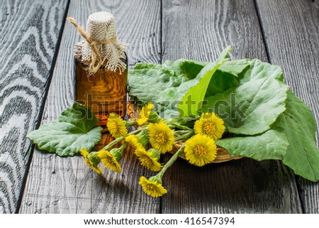 Medicinal plant  coltsfoot (Tussilago farfara). The infusion, leaves and flowers in a basket - stock photo