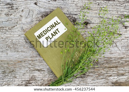 Medicinal plant shepherd's purse (Capsella bursa-pastoris) and herbalist handbook on old wooden table. Used in herbal medicine, healthy eating, as well as for cosmetics purposes - stock photo