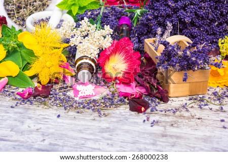 Medicinal plants, globules, Homeopathy - stock photo