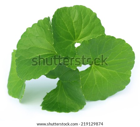 Medicinal thankuni leaves of Indian subcontinent over white background - stock photo