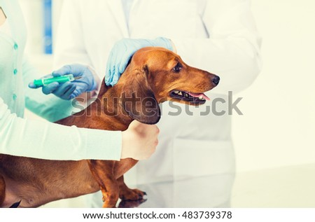 medicine, pet, animals, health care and people concept - close up of veterinarian doctor with syringe making vaccine injection to dachshund dog at vet clinic