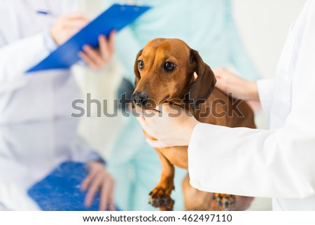 medicine, pet care and people concept - close up of dachshund dog and veterinarian doctor with clipboard taking notes at vet clinic