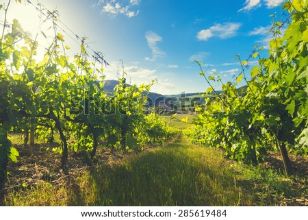 Medieval church among vineyards in the sunny summer Tuscany, Montalcino - stock photo