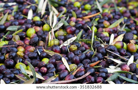 Mediterranean classics â?? ripe Spanish green and black olives - stock photo
