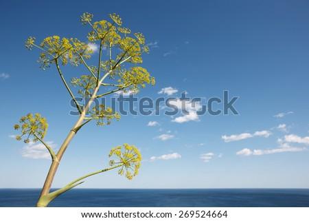 Mediterranean coastline landscape with plant in Alicante. Spain. Horizontal - stock photo
